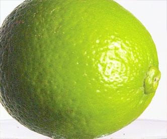Die grüne Schale der Limette, die übrigens sehr oft unbehandelt und daher gut essbar ist, eignet sich super als Garnitur.