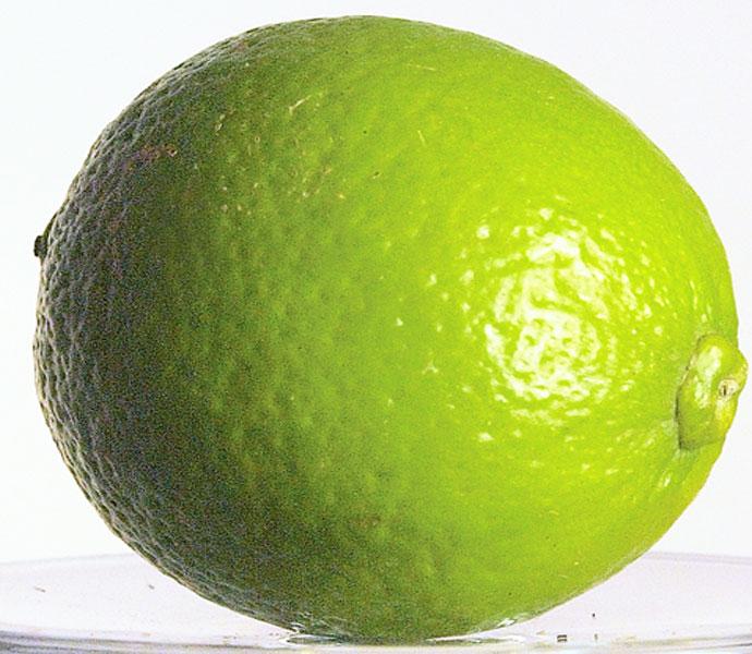 Lime Juice z.B. Rose's von Schweppes ist die alkoholfreie Zutat des Peytreuse.